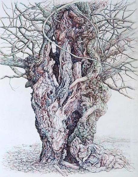Old Oak Tree Richmond Park.jpg