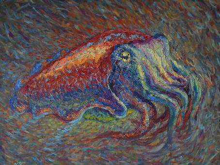 Colourful Cuttlefish