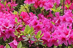 Turf Pride Augusta can help with Shrub Care