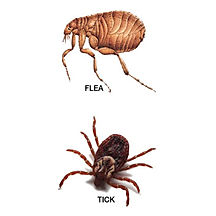flea and tick control augusta ga.jpg