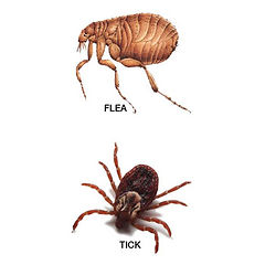 flea and tick control augusta ga.jpg