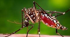 mosquito control augusta ga.jpg