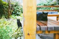 🐈🐈two cats. __📷canon #canon #photogra