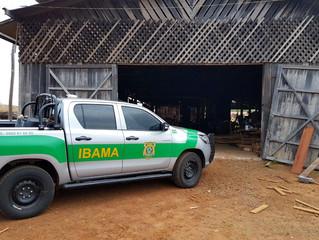 Ibama autua 2 mil empresas do setor madeireiro por fraudes no pagamento da Taxa de Fiscalização e Co