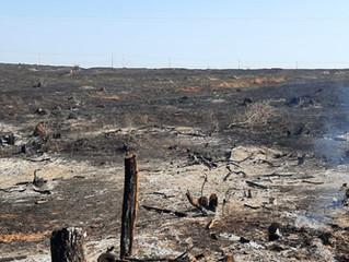 Ocorrência de Incêndios Florestais em MG durante o verão