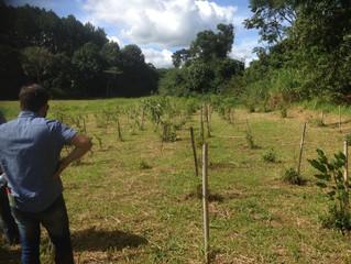 Curso de Restauração Florestal