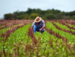Parabéns Agricultor.
