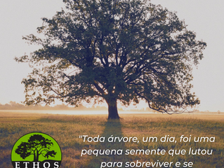 🌳 Dia da Árvore | 21 de Setembro