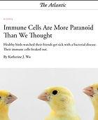 Atlantic_canary article.jpg