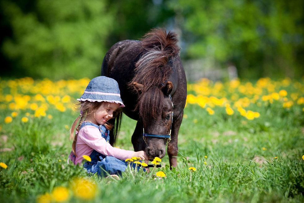 Child and small horse in field.jpg