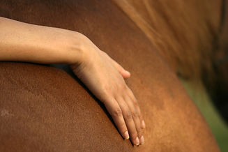 hand touching horse ,equine assisted lea
