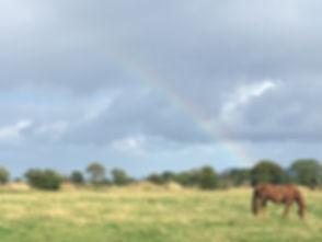rainbow D.jpg