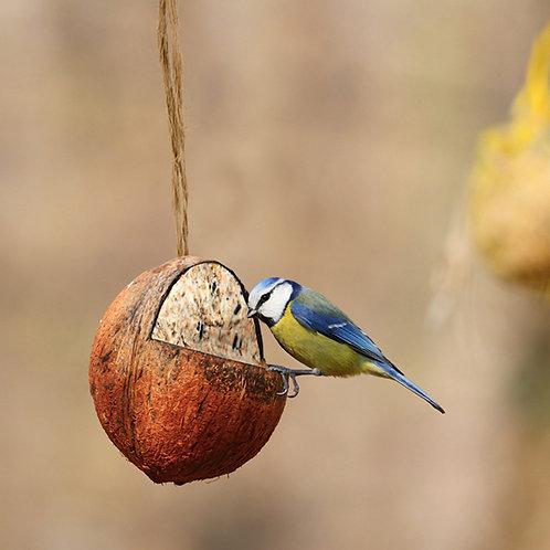 Gevulde kokosnoot FB905