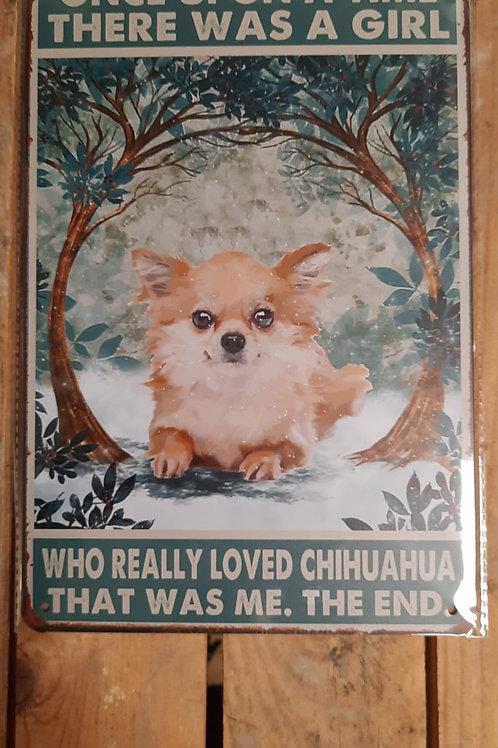Chichuahua Puppy KE 024