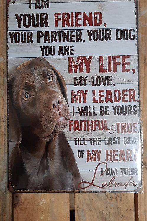 Labrador Friend  KE020