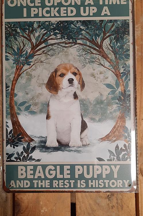 Beagle puppy  KE022