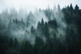 Aeiral Foggy Forest shutterstock.jpg