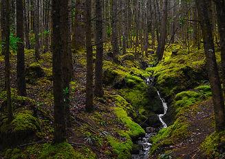 Verdant Forest Creek shutterstock.jpg