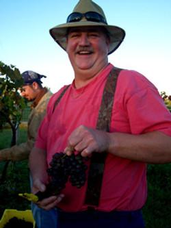 Steve Crabtree - Grapes