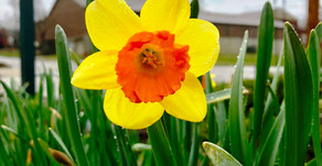 Spring Bloomers