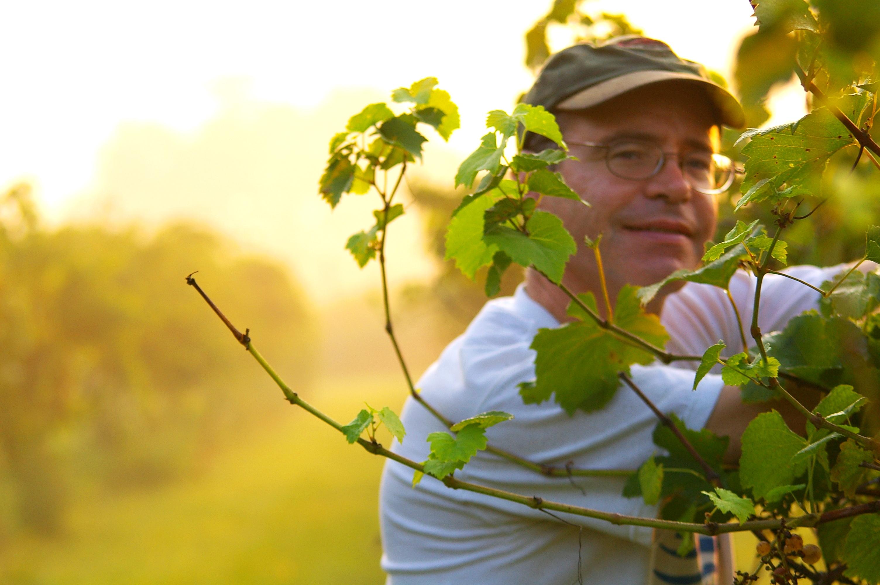 Chris Lanthier with vineyard sunrise