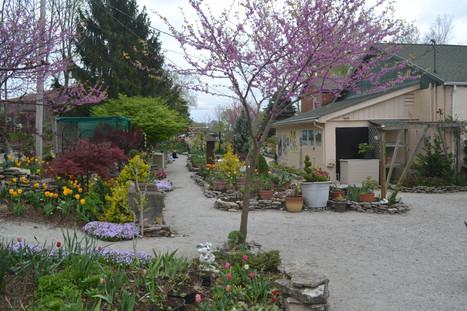Lanthier Winery spring garden