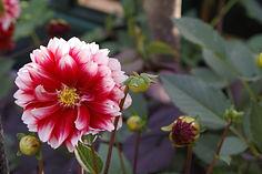 summerflower-garden-.jpg