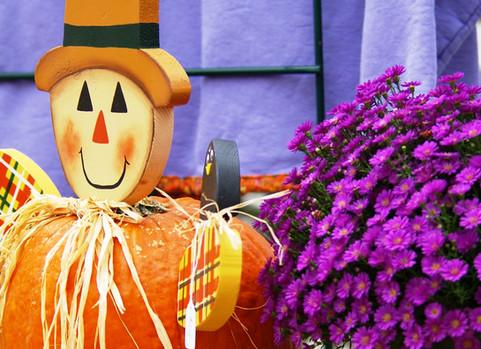 jumbo fall mums at harvest festival.JPG
