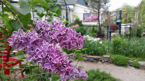 Garden of Art with beautiful blooms