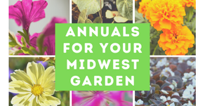 Annuals For Your Midwest Garden