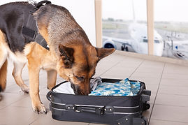 21st Century Sniffer Dog, explosive detection, airport security, cargo container control, border control, drug detection, airport screening, terrorist screening, drug detection dog, eletronic sniffing dog, znose, est, znose model 4600