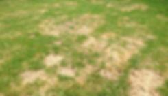 brown_patch.jpg