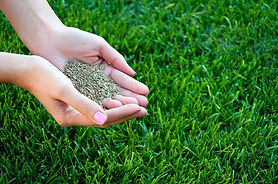 Our lawn seeding services in Chesapeake, VA