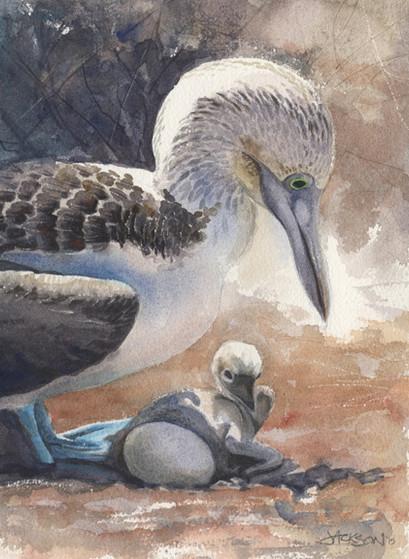 Booby Birds