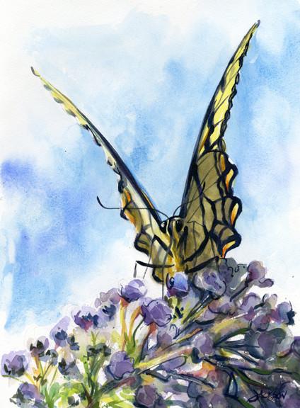 Swalowtail