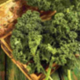 Kale-Dwarf-Blue-Curled-Vegetable-Ferry-M