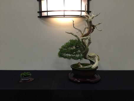 GSBF Convention Judged Exhibit Trees