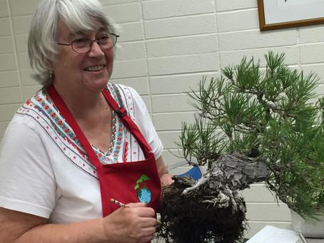 Kathy Benson Japanese Black Pine Fall Repotting