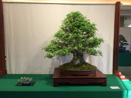 California Bonsai Society show at the Huntington