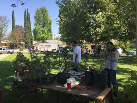 Los Angeles Bonsai Swap Meet