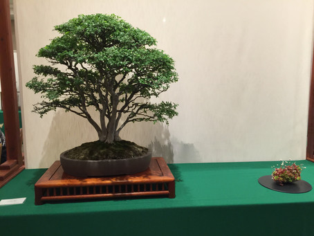 CBS 59th Bonsai Exhibition