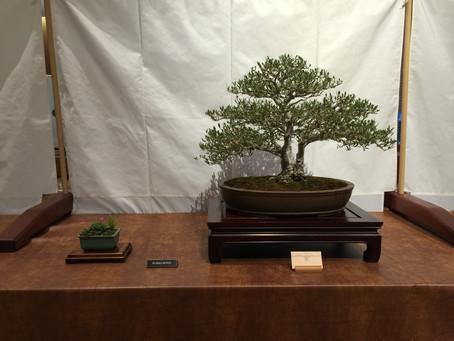 """Dai-ichi 30th Bonsai Show """"Serenity through Bonsai"""""""
