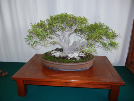2016 Kofu Kai Bonsai Club Show