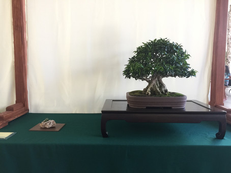 Kofu Kai Bonsai Club Show at the Bower's