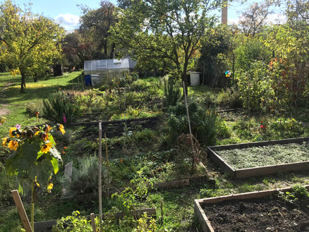 What I didn't know about community gardens in Prague