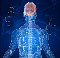 Man diagram x-ray nervous system