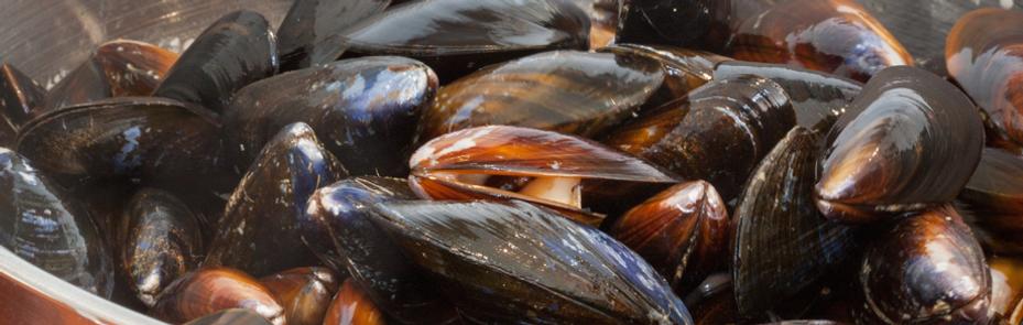 Pelican Refrigerated Shellfish Displays