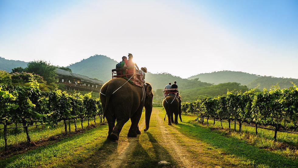 home - 2021 - elephant vineyard.jpg