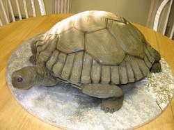Tortoise groom's cake