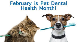 feb-pet-dental-month___21113036473.jpg